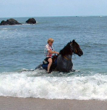 Criollo stallion Cacique rides the waves.