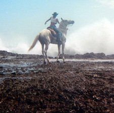 Horseback Beach Ride